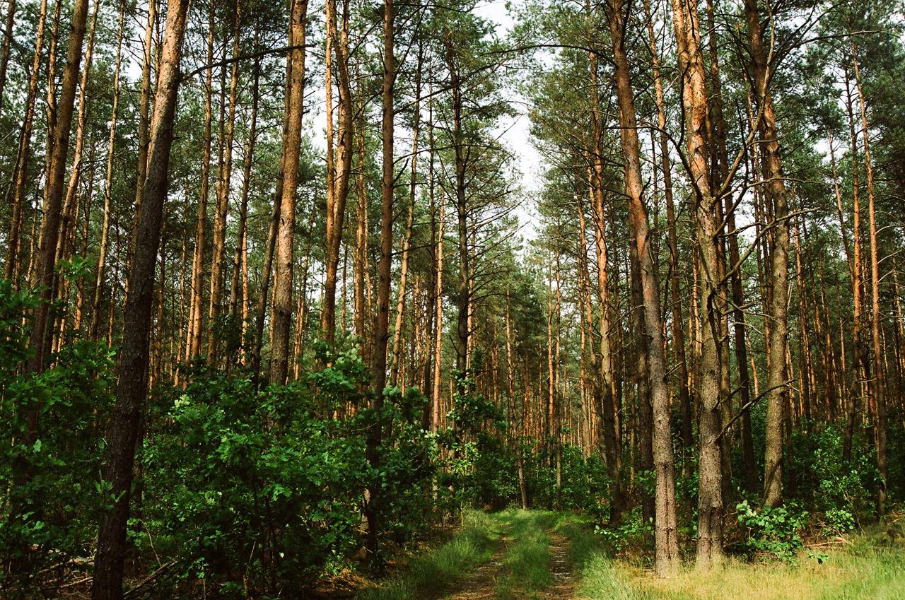 Lasy bankrutują. Od maja 2016 rozpocznie się ich wyprzedaż