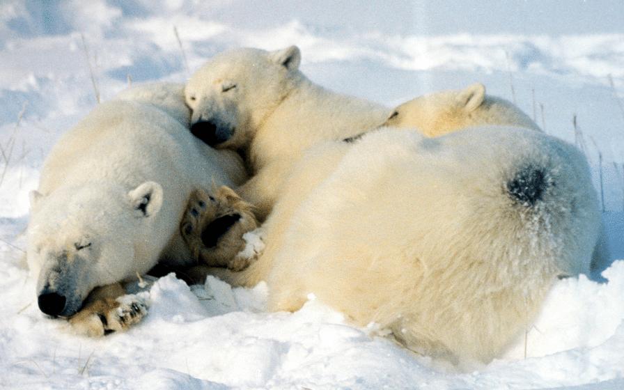 Wiceminister: Nadszedł czas by Rosja weszła i podbiła Arktykę