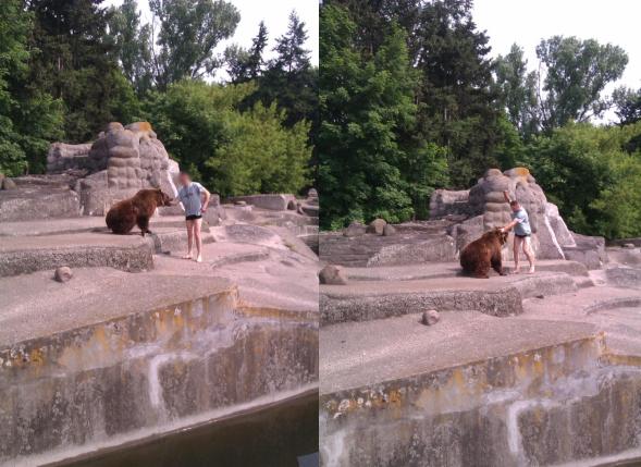 Bezmyślne wtargnięcie na wybieg dla niedźwiedzi. O krok od tragedii