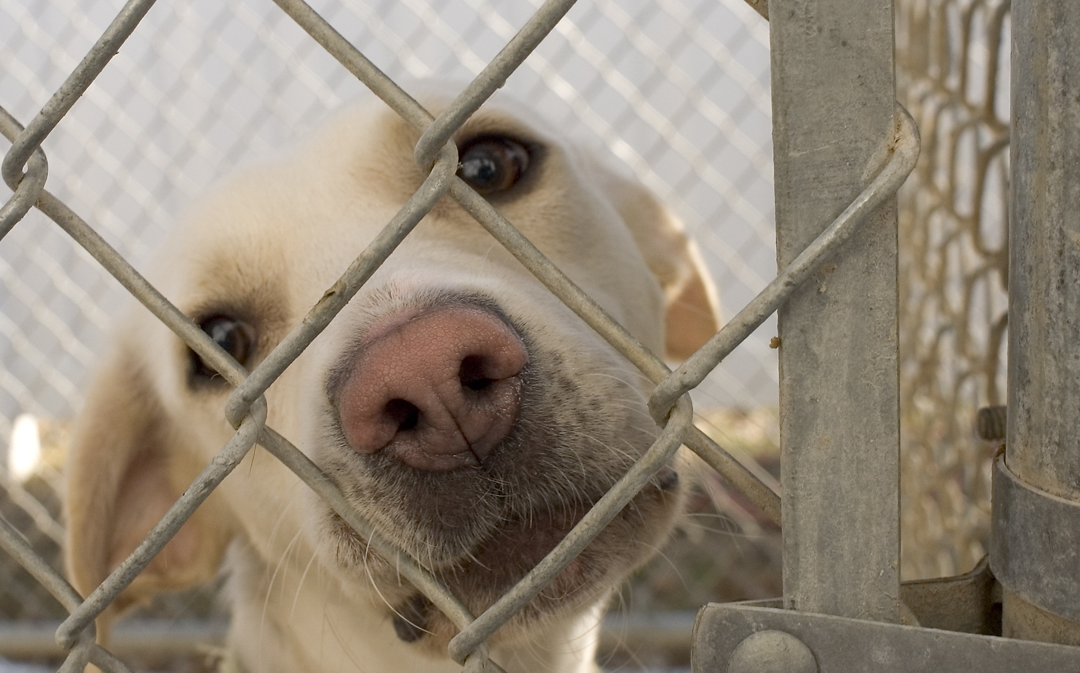 """NIK: Państwowe środki wydawane na """"ochronę zwierząt"""" finansują eksterminację psów"""