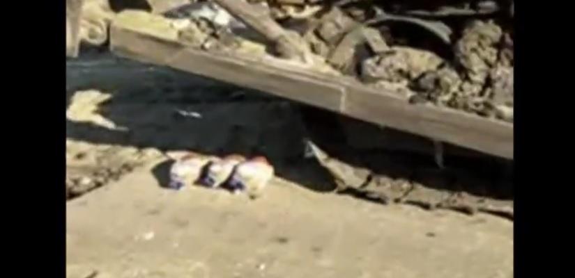 Rosja: Trzy nielegalne mrożone gęsi zniszczone buldożerem