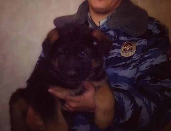 Putin sprezentował Francuzom psa. Zastąpi zabitą w zamachach policyjną suczkę