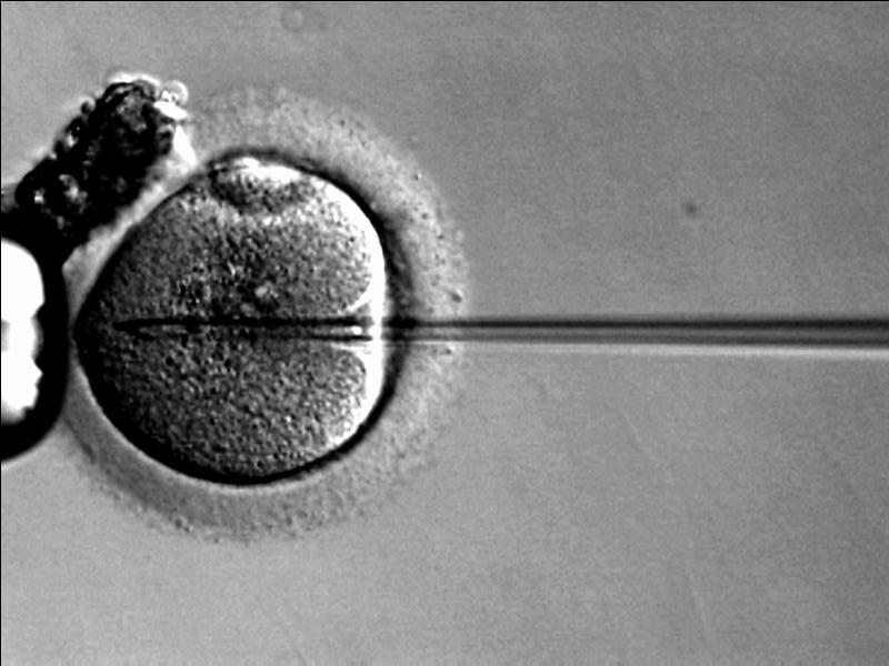 Brytyjscy naukowcy będą mogli eksperymentować na ludzkich embrionach