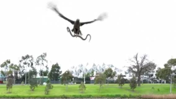 Family-having-a-peaceful-BBQ-shocked-as-hawk-drops-snake-onto-the-grill