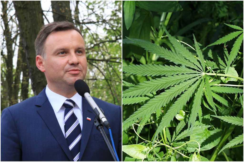 Prezydent Duda angażuje się w legalizację medycznej marihuany