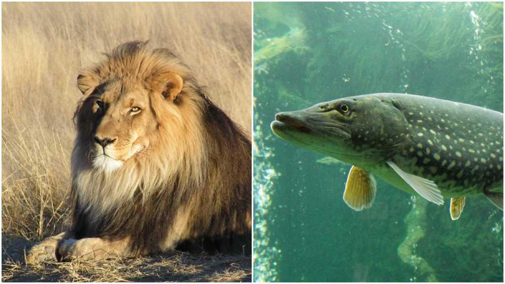 Szokujący raport WWF: Do 2020 roku wyginie 2/3 dzikich zwierząt