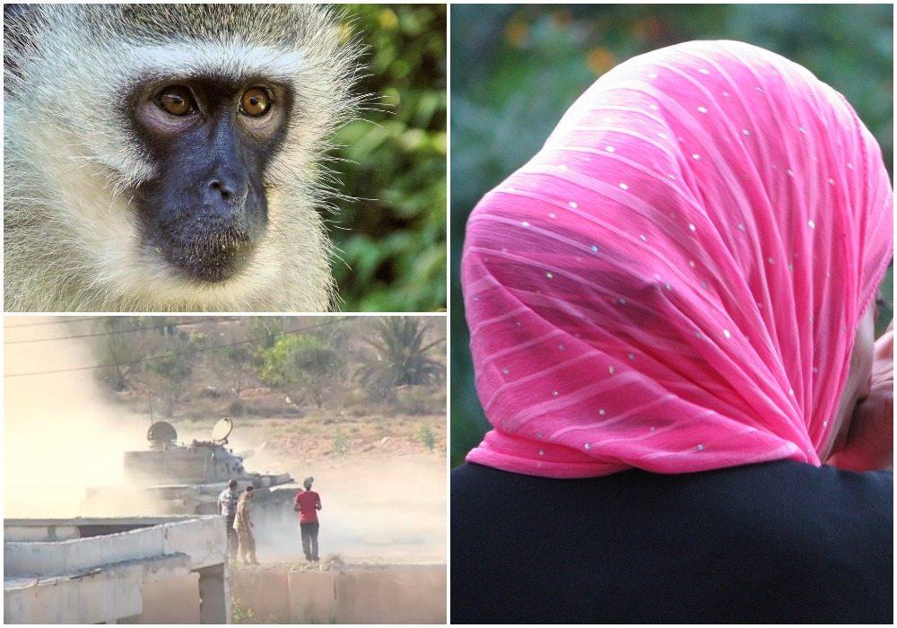 Trwa krwawa rzeź z udziałem czołgów i moździerzy. Wszystko przez małpę, która ukradła dziecku hidżab