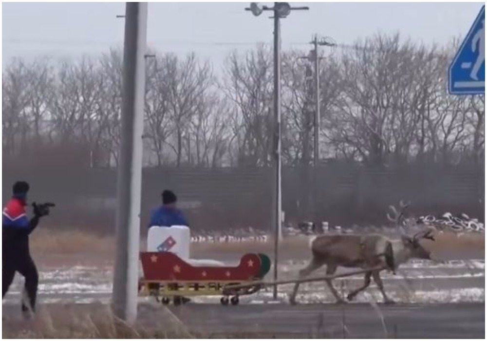 Urocza promocja świąteczna. Pizza dostarczana jest przez renifery (VIDEO)
