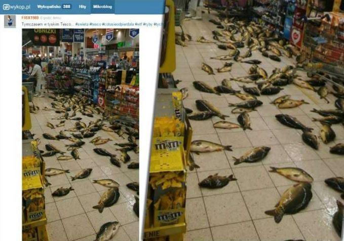Skandal, podłoga w Tesco zasłana żywymi karpiami. Sieć się tłumaczy