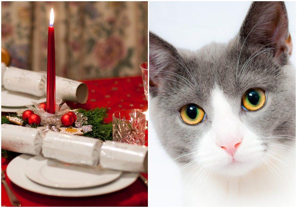 W bogatym europejskim kraju świątecznym przysmakiem jest pasztet z kota
