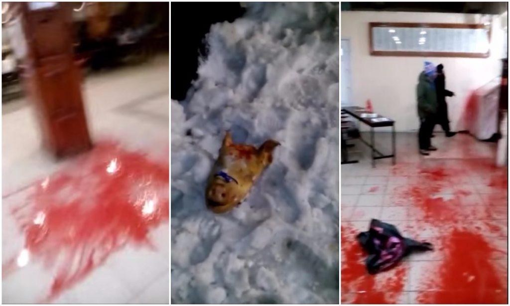 Ukraina: Żydzi w szoku po profanacji grobu. Świńska głowa ze swastyką, krew i gaz łzawiący (VIDEO +18)