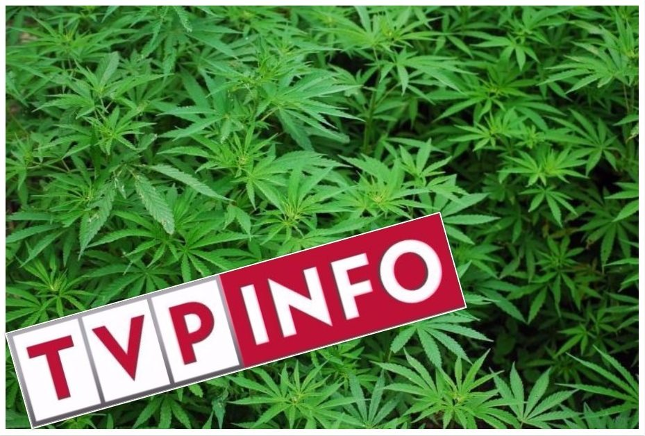 Gigantyczna wpadka TVP Info. Na oficjalnym koncie prywatne rozmowy o marihuanie (foto)