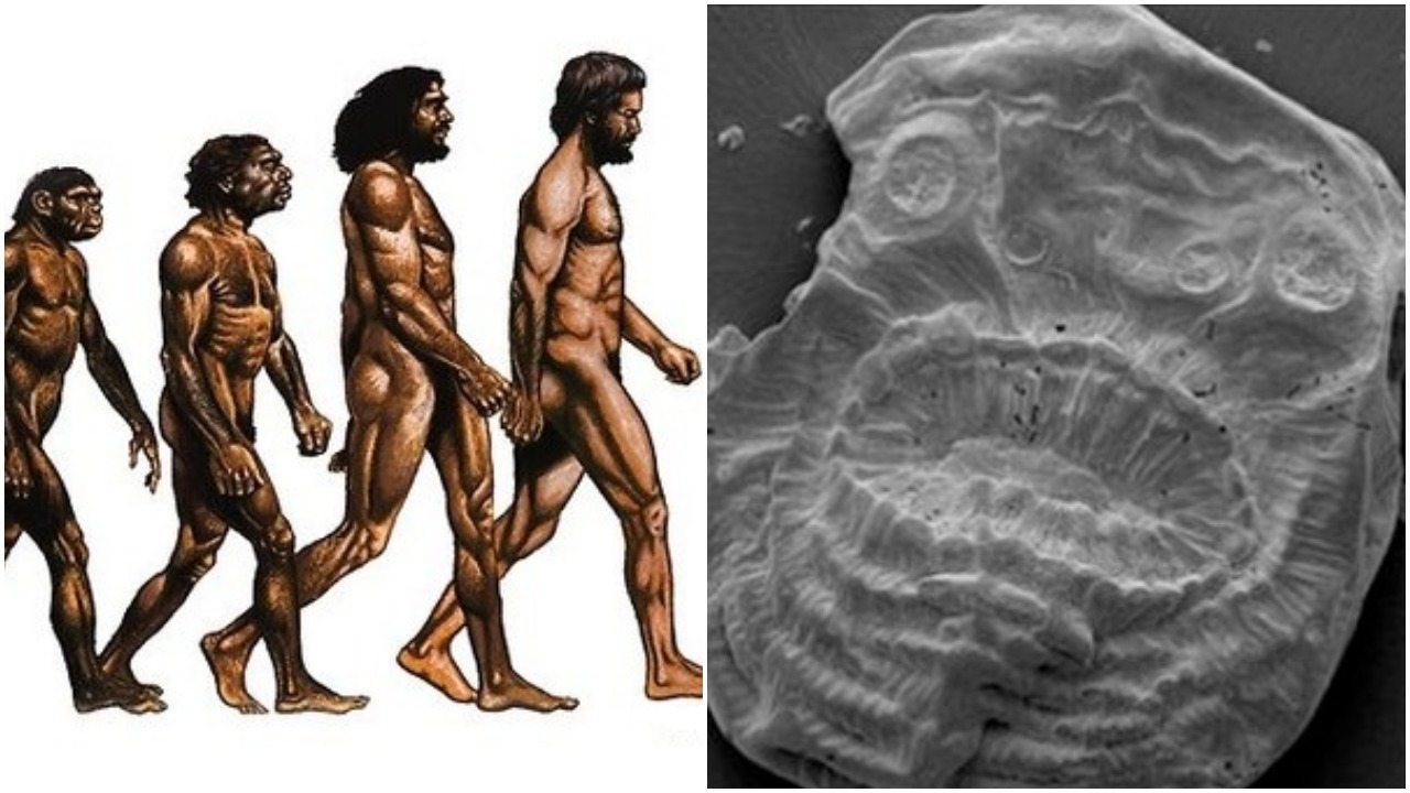 Tak wyglądał najstarszy przodek człowieka? Naukowcy: TO PRZEŁOM! (zdjęcia)