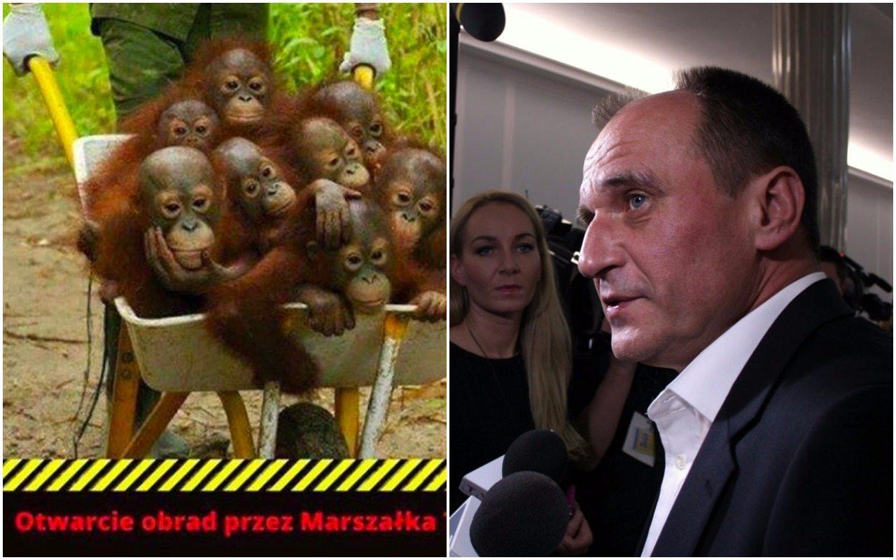 Kukiz: Nie zgadzam się na takie porównania. Małpy to mądre zwierzęta!