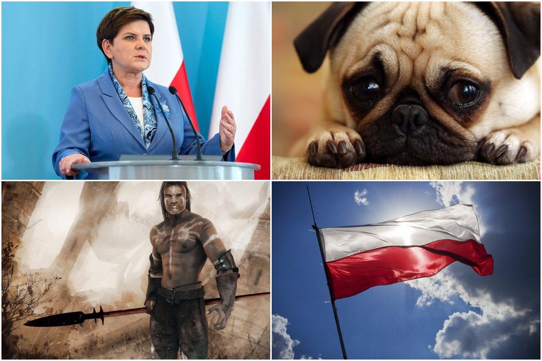"""Telewizja pobiła rekord propagandy. """"Przed Beatą Szydło Polacy polowali na psy i je jedli"""""""
