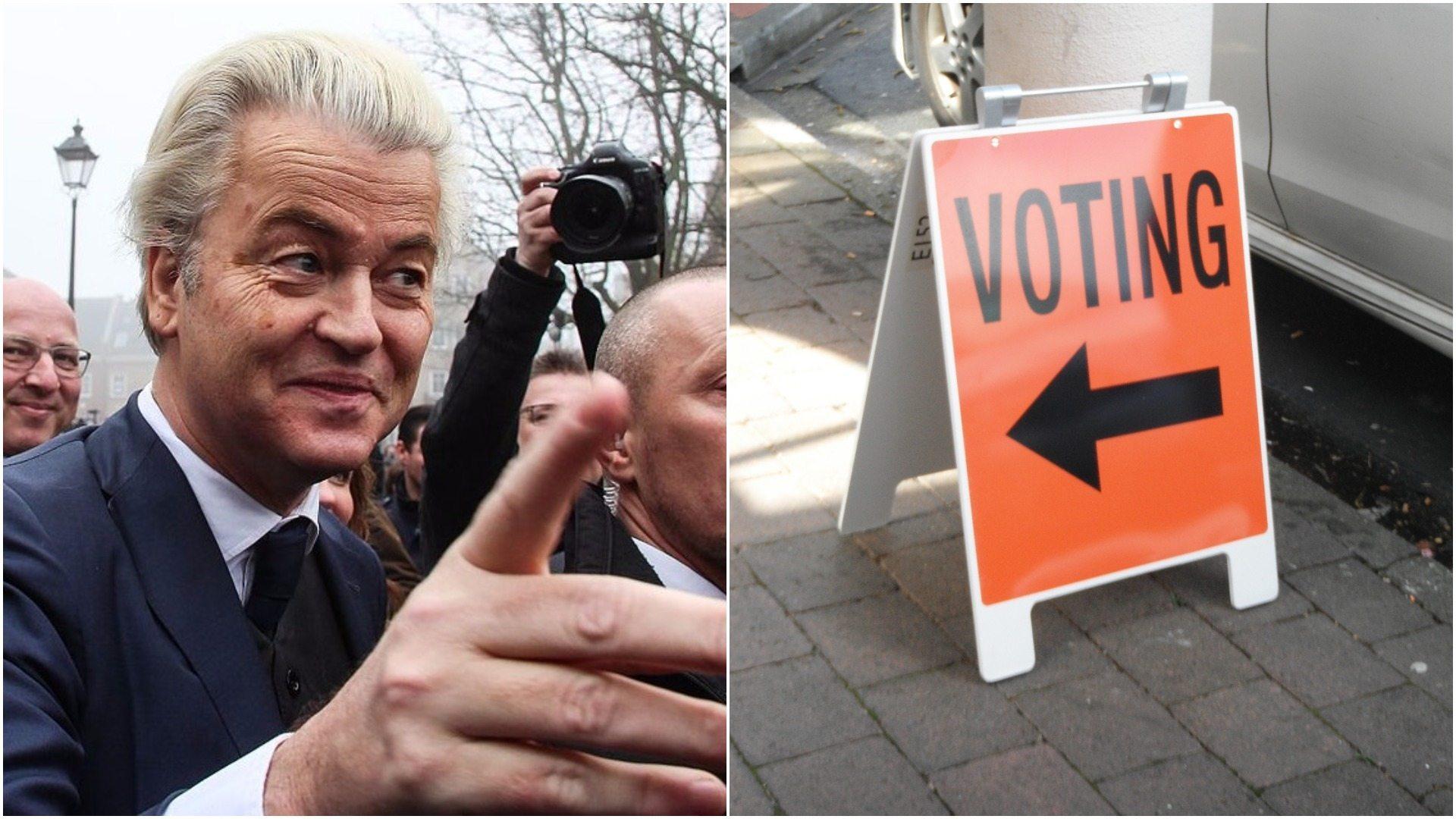 Wybory w Holandii. Wilders: Już zwyciężyliśmy!