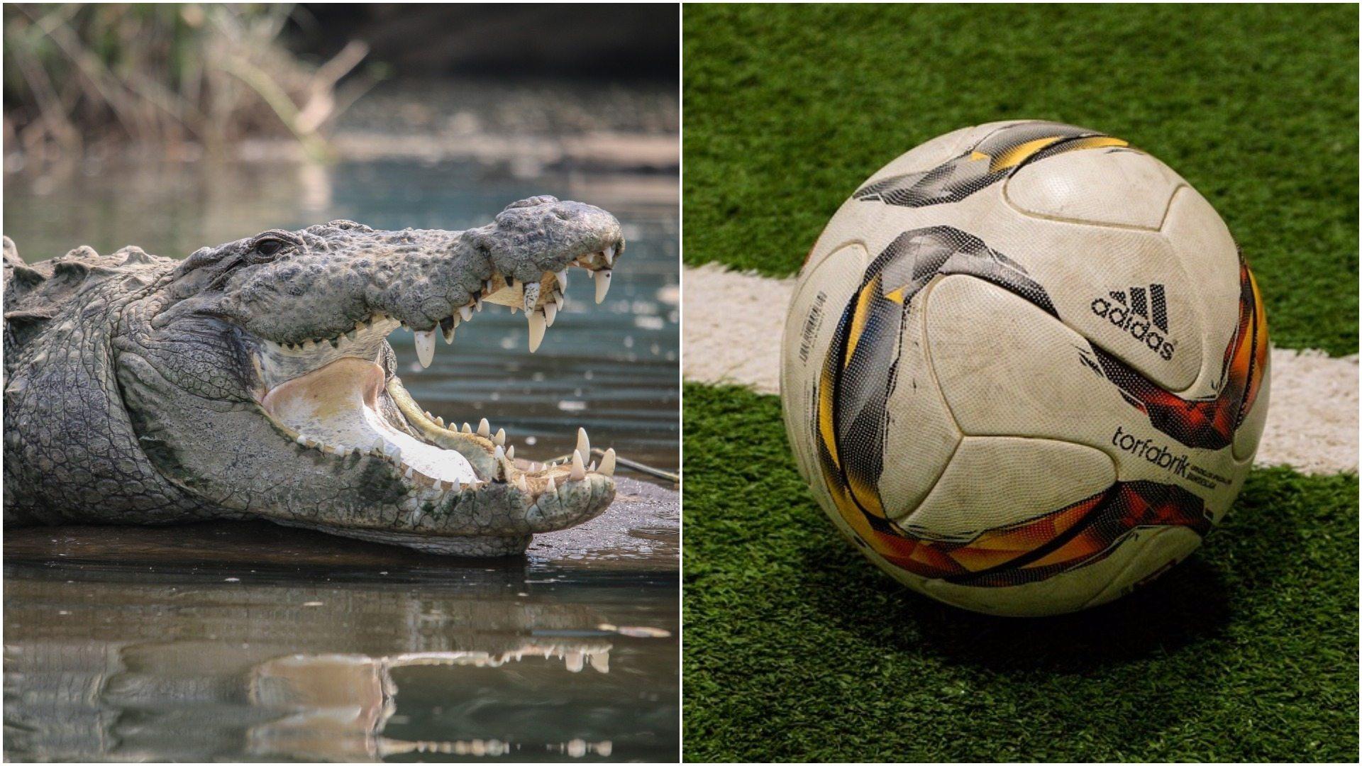 Piłkarz pożarty przez krokodyla! Koledzy z drużyny nie mogli mu pomóc