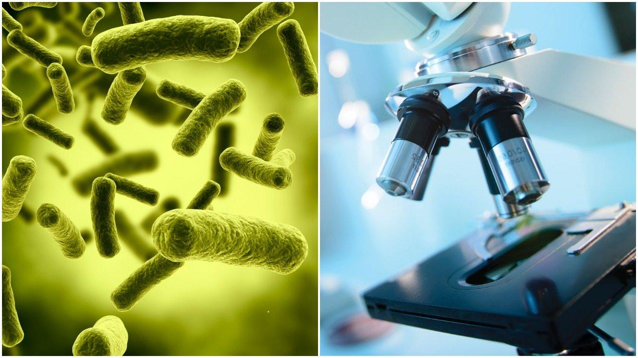 WHO ujawniło listę najgroźniejszych bakterii. Nie ma na nie lekarstw