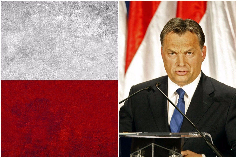 Viktor Orban szczerze: Zazdrościmy Polsce!