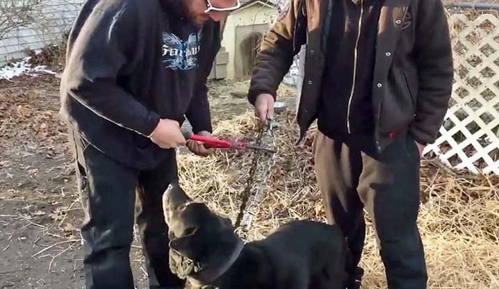 W tym mieście wprowadzono zakaz trzymania psów na łańcuchu