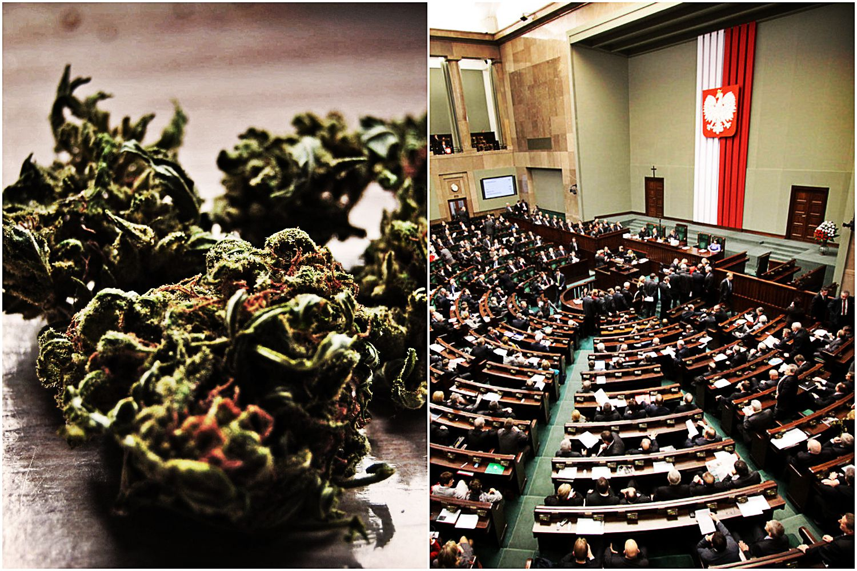 REWOLUCJA! W Polsce będzie dostępna lecznicza marihuana! Tylko jedna partia ma uwagi...