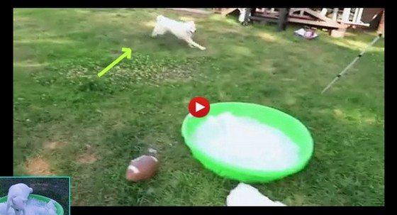 Nasypał Husky'emu lodu do wanienki. Jego reakcja jest genialna. Oszalał (VIDEO)