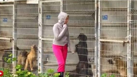 Kobieta nie mogła się zdecydować, jakiego psa ma zabrać. Zrobiła coś niesamowitego. Wykupiła całe schronisko! Zrobiła to ponieważ...