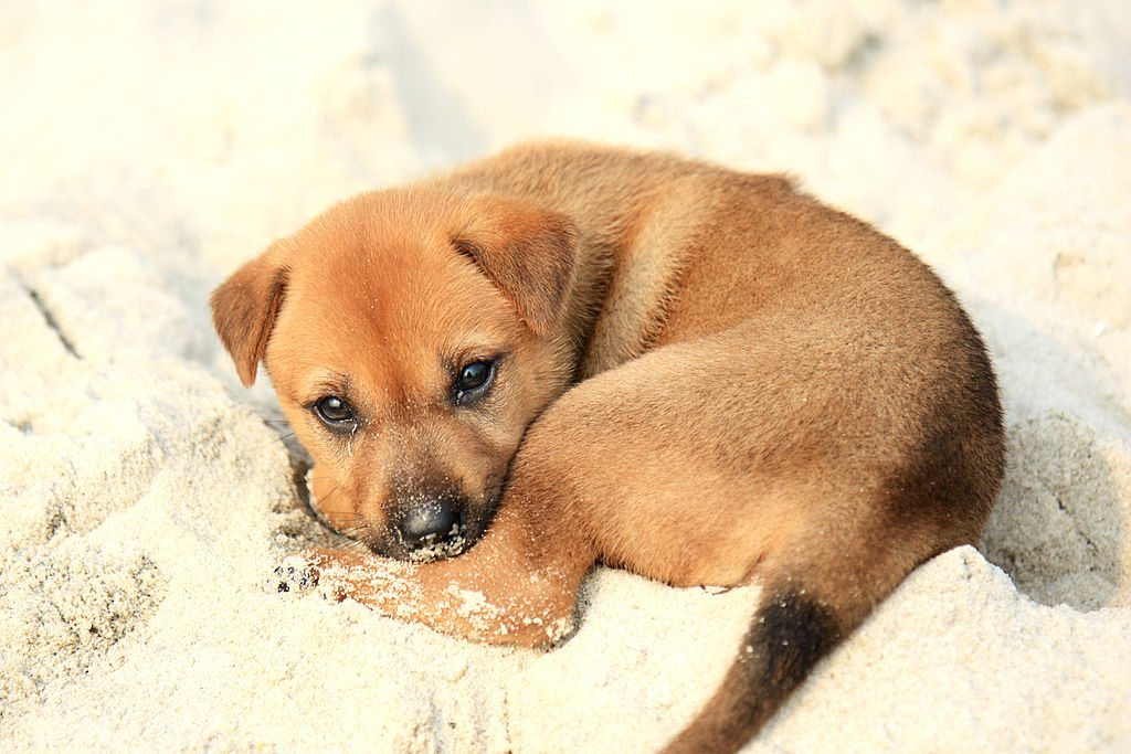 1024px-Puppy_on_Halong_Bay