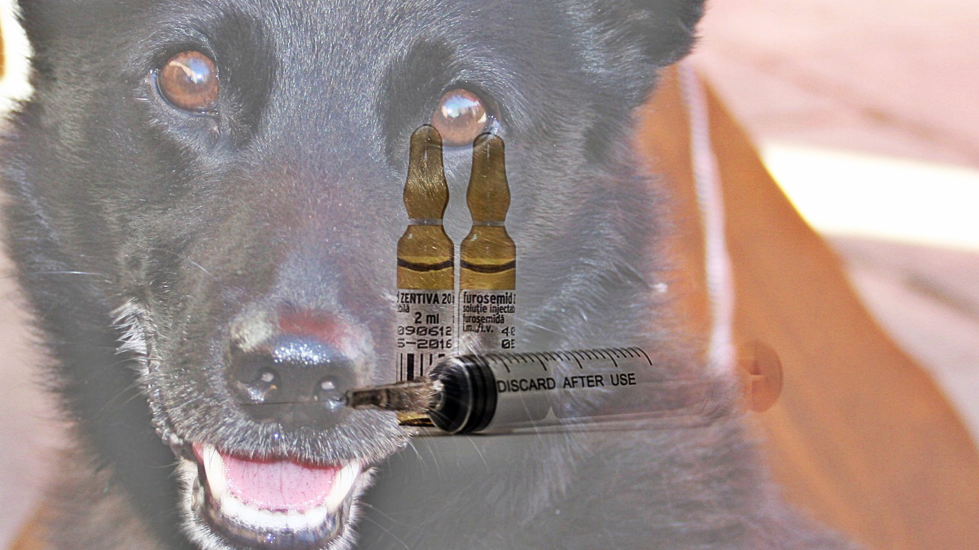 Antyszczepionkowcy biorą się za zwierzęta. Namawiają do nieszczepienia psów