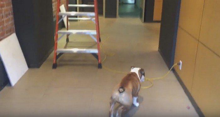 Pies bał się przejść przez kabel podłączony do prądu. Spójrz, co on wymyślił  (VIDEO)