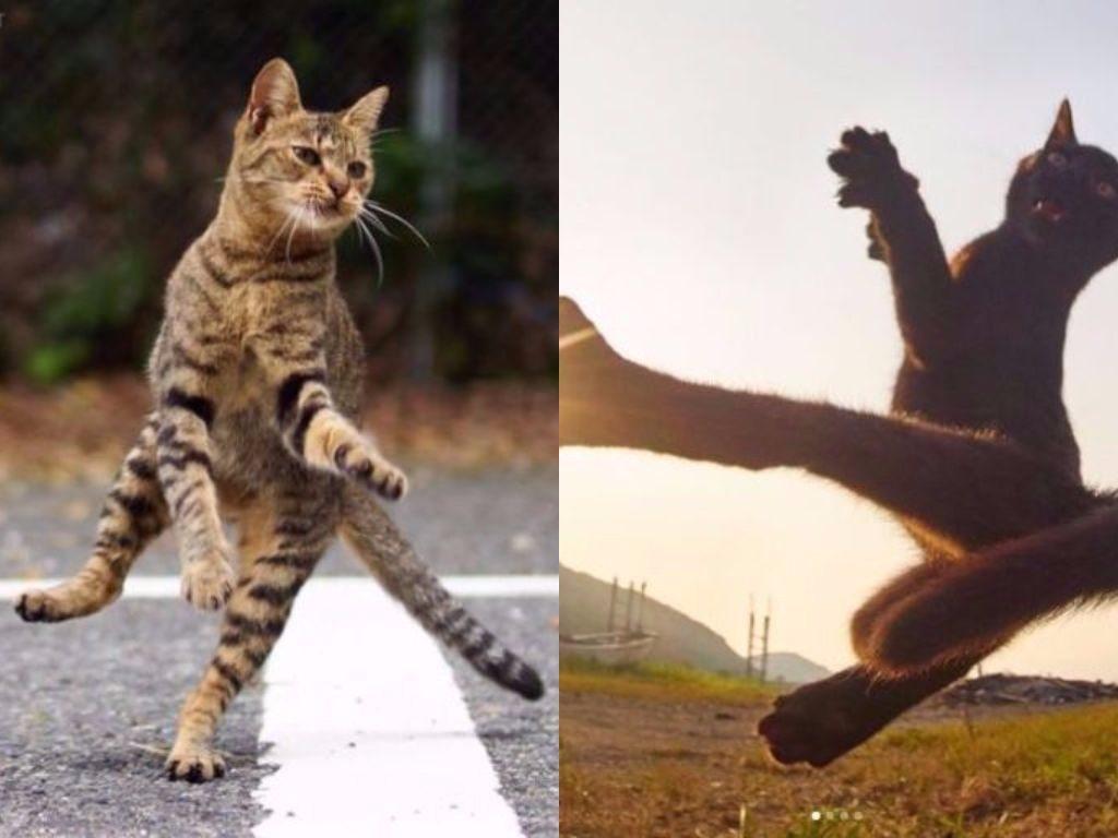 Te koty zaskoczą cię swoimi NIESAMOWITYMI zdolnościami!