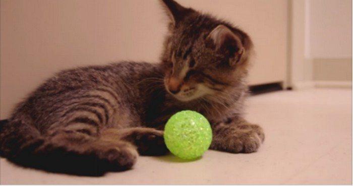 Niewidomy od urodzenia kociak dostał swoją pierwszą zabawkę. Reakcja jest zaskakująca (VIDEO)
