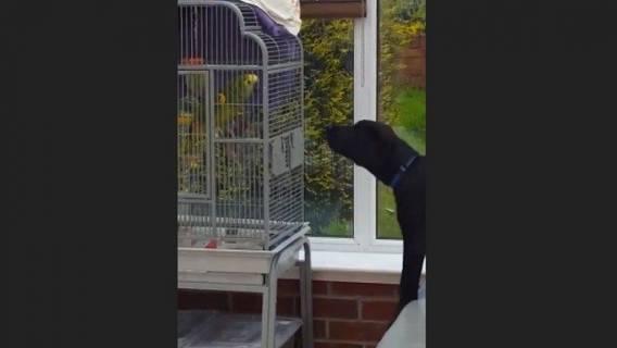 Papuga zaczęła szczekać i naśladować szczeniaka. Pies był zdezorientowany (VIDEO)