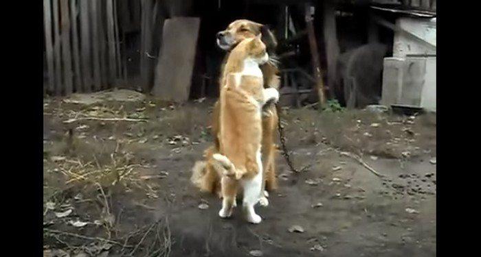 Kot i jego cudowne zachowanie w stosunku do psa. Spójrz, co zrobił.. (VIDEO)