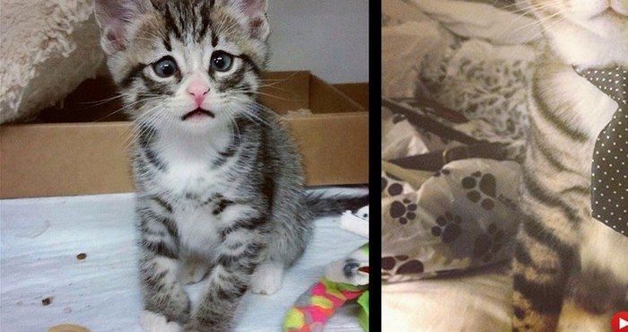 Pamiętacie tego smutnego kociaka? Od tego czasu bardzo się zmienił. Tak teraz wygląda (foto)