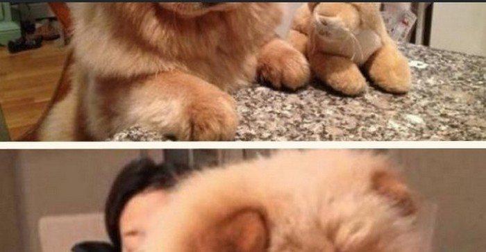 Takiego psa chciałby mieć chyba każdy. Jest niesamowity (FOTO)