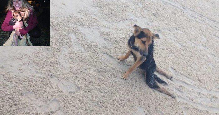 Znalazła go na plaży ciągnącego za sobą tylne łapki. Nie mogła go tam zostawić, więc ... (FOTO)