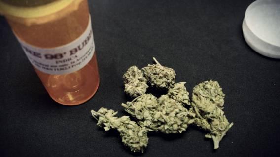 Marihuana-medyczna-1