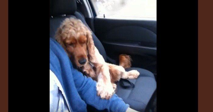 Pies nalega, aby jego właściciel trzymał go za łapkę podczas jazdy samochodem (VIDEO)