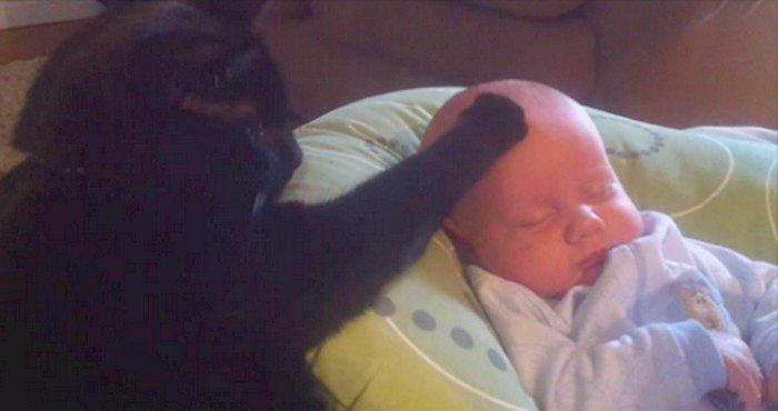 Kot sprawia, że płaczące dziecko momentalnie zasypia. Musisz to zobaczyć (VIDEO)
