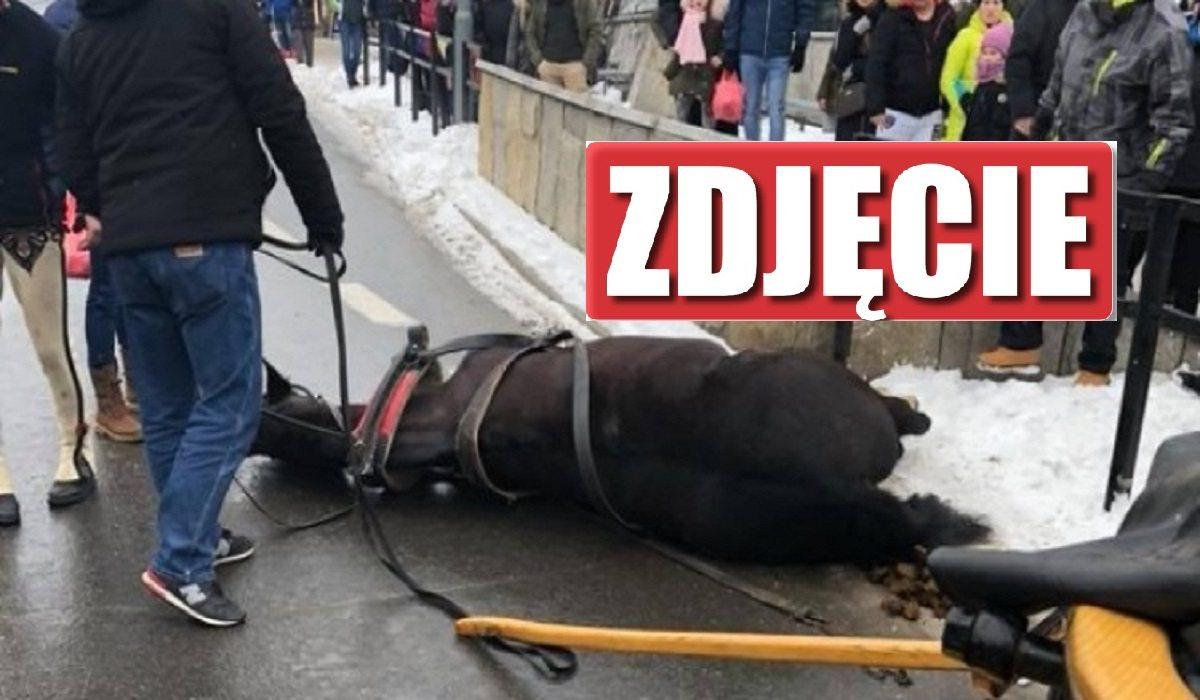 Tragedia na Krupówkach. Koń taranował wszystko na swojej drodze, ranne dziecko