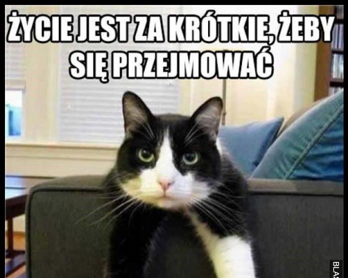 kociak