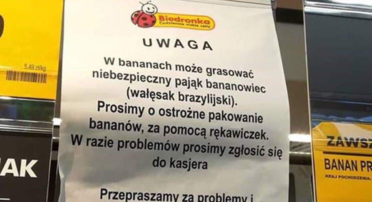 Pająk Wywołujący Erekcję W Bananach Biedronka Się Tłumaczy