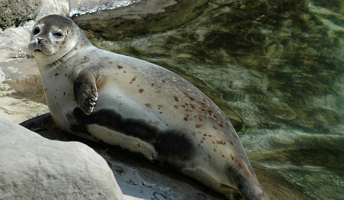 Jaka pocieszna! Niespotykane zwierzę na plaży w Międzyzdrojach