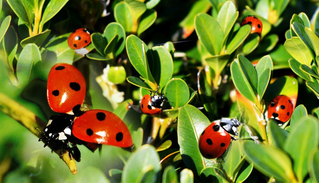 Biolodzy biją na alarm! Zamykajcie okna, plaga gryzących owadów szturmem bierze Polskę
