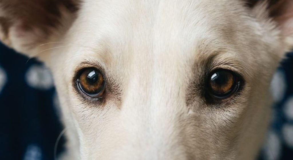 92% Polaków wierzy w popularny mit o psim wzroku. Czas go wreszcie obalić!