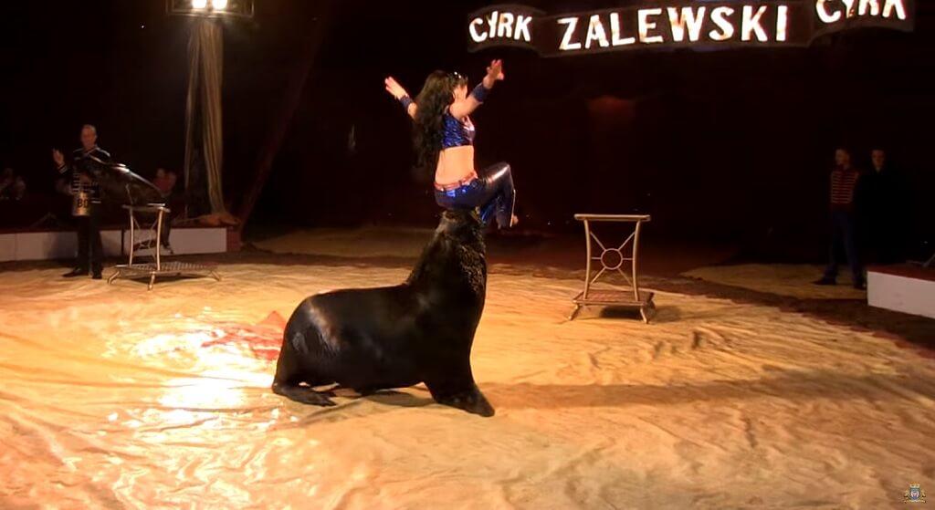 Zwierzęta w cyrku? Circus 1903 wymyślili coś co nawet obrońcy zwierząt pochwalą