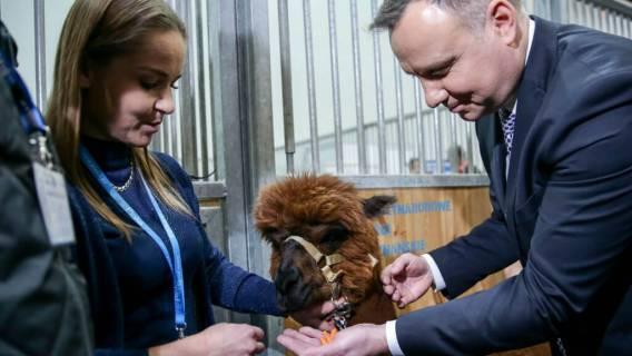 Duda robi sobie selfie z koniem i modli się do mięsa. Znacie drugiego takiego Prezydenta?