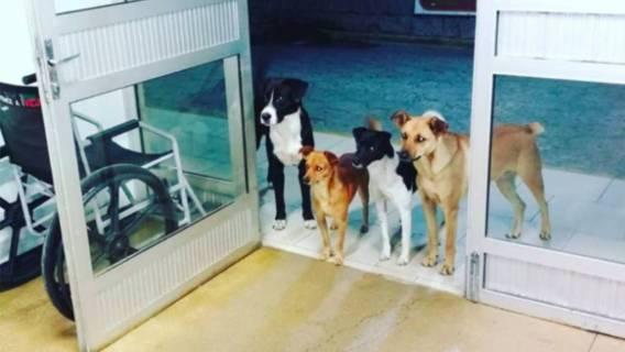 Psy czekały całą noc na właściciela. Gdy usłyszycie zakończenie historii, rozpłaczecie się