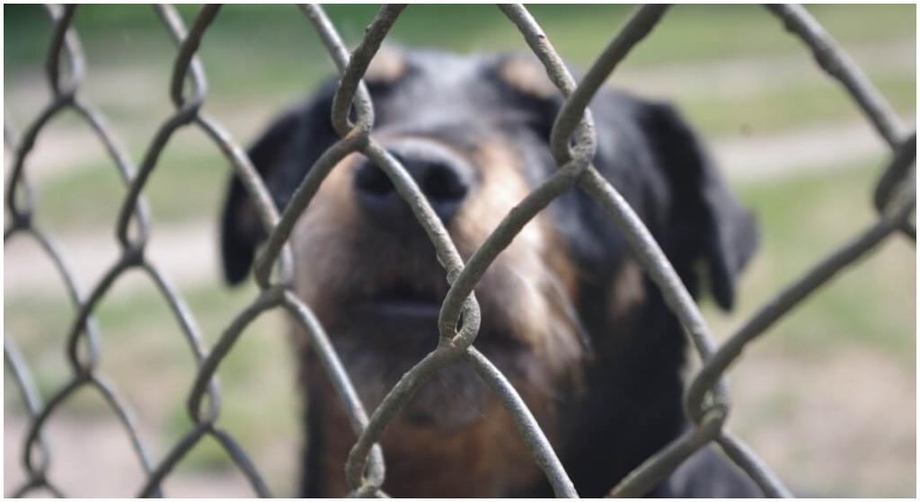 Chcieli adoptować najsmutniejszego psa. Wszyscy ich przed nim ostrzegali